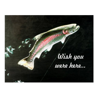 Hooked Rainbow Trout Fish Postcard