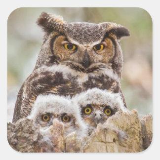 Hoot Owl Sticker