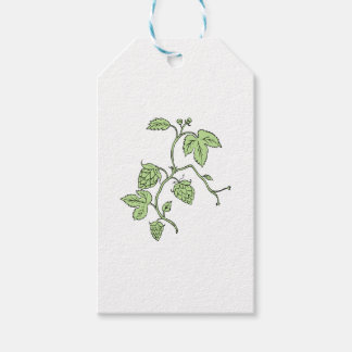 Hop Plant Climbing Drawing