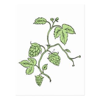Hop Plant Climbing Drawing Postcard