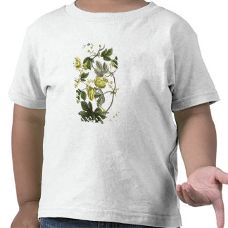 Hop Vine, from 'The Young Landsman', published Vie Shirt