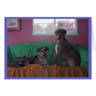 Hope and Hero Merle Great Danes Card