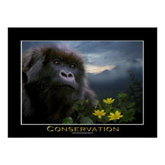 """HOPE"" Mountain Gorilla Africa Wildlife Art Poster"
