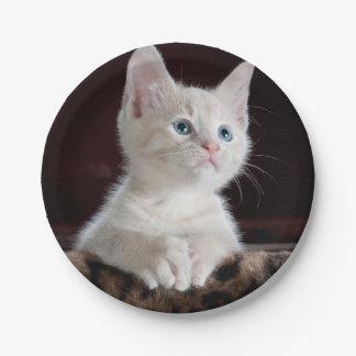 Hopeful Kitten Paper Plate