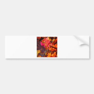 Horn with flowers to Thanksgiving Bumper Sticker