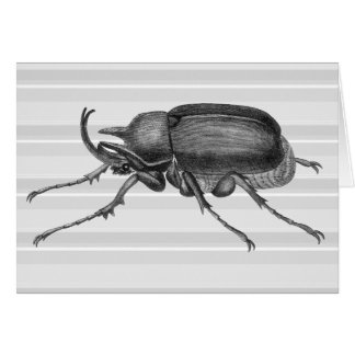 Horned Beetle from Diderot's Encylopaedia Card