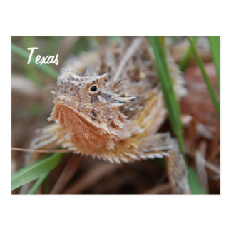 Horned Lizard, Texas Postcard