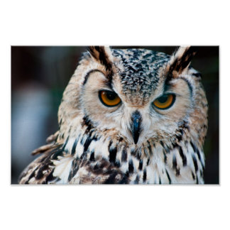 Horned Owl Bird Poster