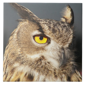 Horned Owl Photo Large Square Tile