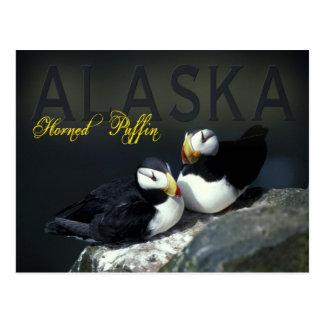 Horned Puffin, Alaska Postcard