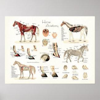 Horse Anatomy Poster