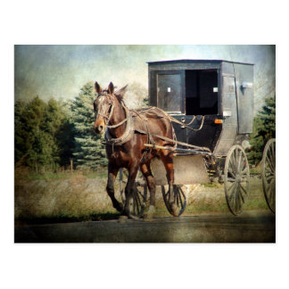 Horse and Buggy in Rural Iowa Postcard