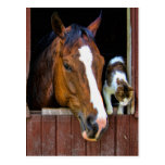 Horse and Cat Postcards