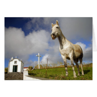 Horse and chapel card