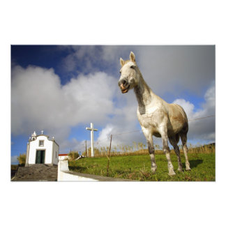 Horse and chapel photograph