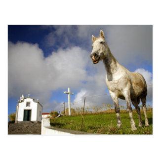Horse and chapel postcard
