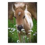 Horse and daisies greeting card