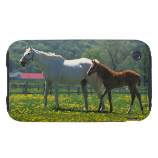 Horse and her foal standing in a field iPhone 3 tough cases