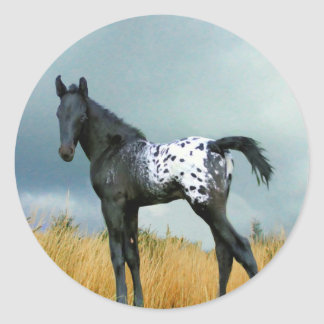 Horse - Appaloosa Colt Round Stickers