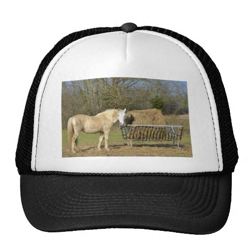 Horse beside the straw manger hat