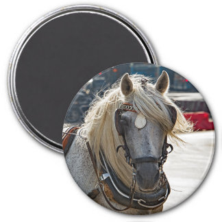 Horse blonde from Malaga Magnet
