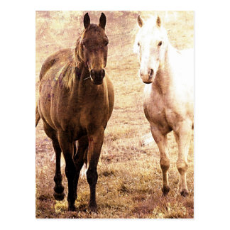 Horse Buddies Sepia Postcard