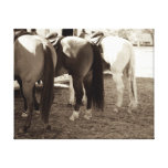 Horse Butts Canvas Photo Gallery Wrapped Canvas