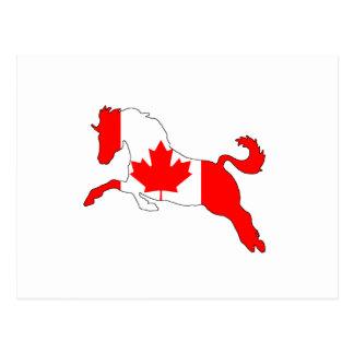 Horse Canada Postcard