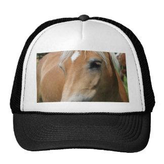 horse cap