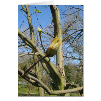 Horse Chestnut bud Card