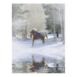 Horse Christmas Postcards