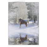 Horse Christmas Season's Greetings Card