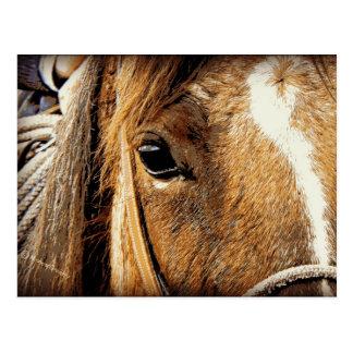 Horse Close Up Postcard