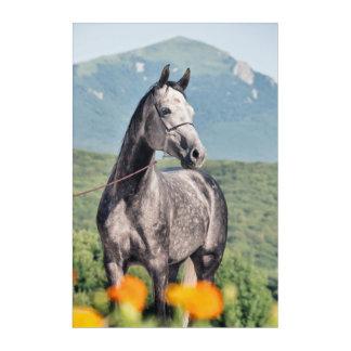 horse collection. arabian gray acrylic print