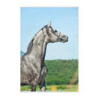 horse collection. arabian gray acrylic wall art