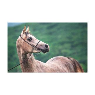 horse collection. arabian gray canvas print
