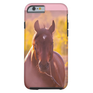 horse collection. autumn tough iPhone 6 case