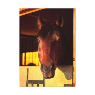 horse collection canvas print