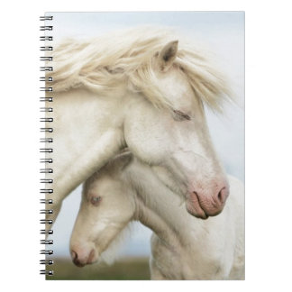Horse collection notebooks