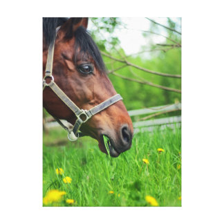 horse collection. spring canvas print