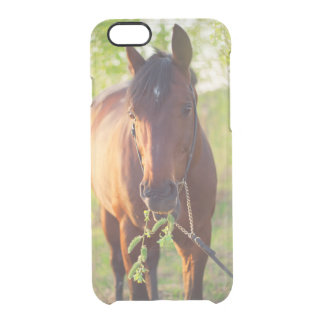 horse collection. spring clear iPhone 6/6S case