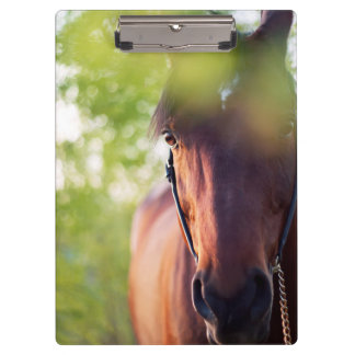horse collection. spring clipboard
