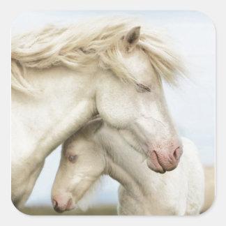 Horse collection square sticker