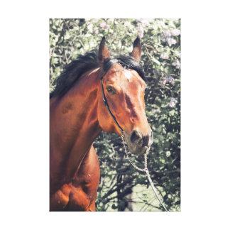 horse collection. Trakehner. spring Canvas Print