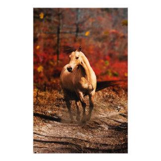 horse colour 14 cm x 21.5 cm flyer