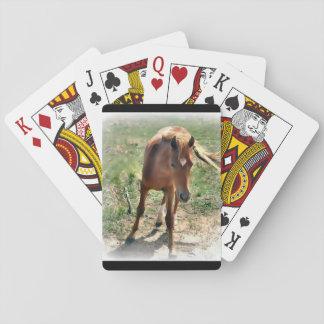 Horse, colt, pasture poker deck