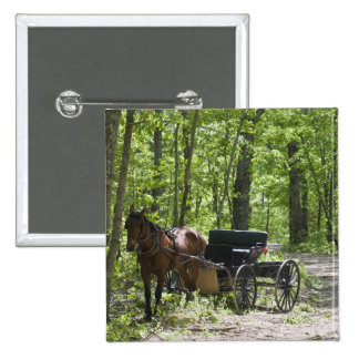 Horse drawn carriage tethered in woods pinback button