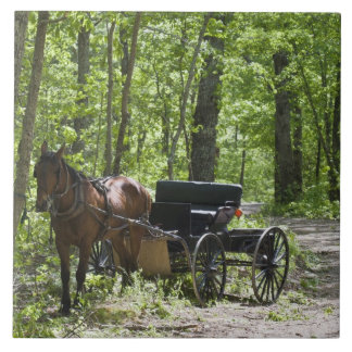 Horse drawn carriage tethered in woods large square tile
