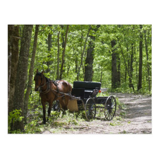 Horse drawn carriage tethered in woods postcard