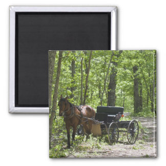 Horse drawn carriage tethered in woods square magnet